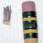Standard graft compared to pencil eraser.